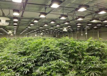 buy indoor grow lights