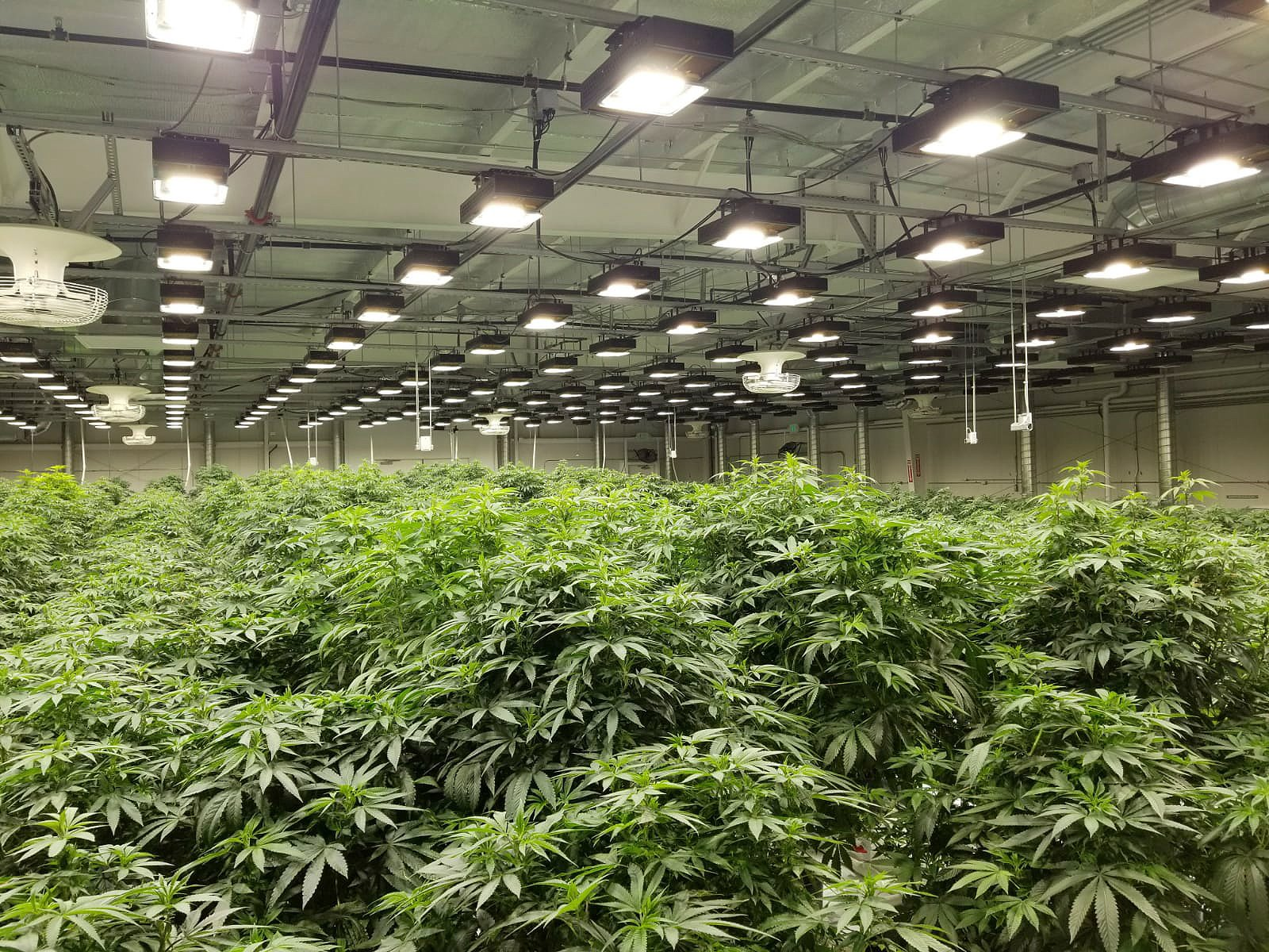 Choose the indoor grow lights for your plants effectively